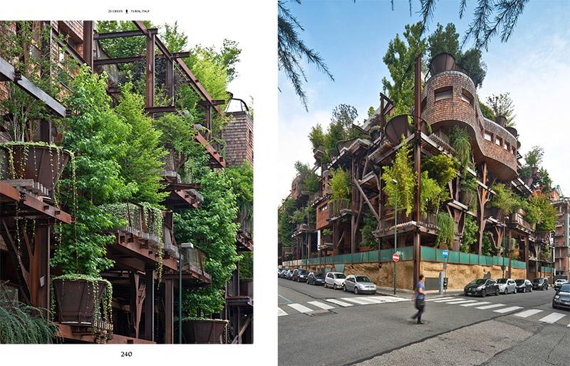 slanted_evergreens_livingwithplans_005.jpg
