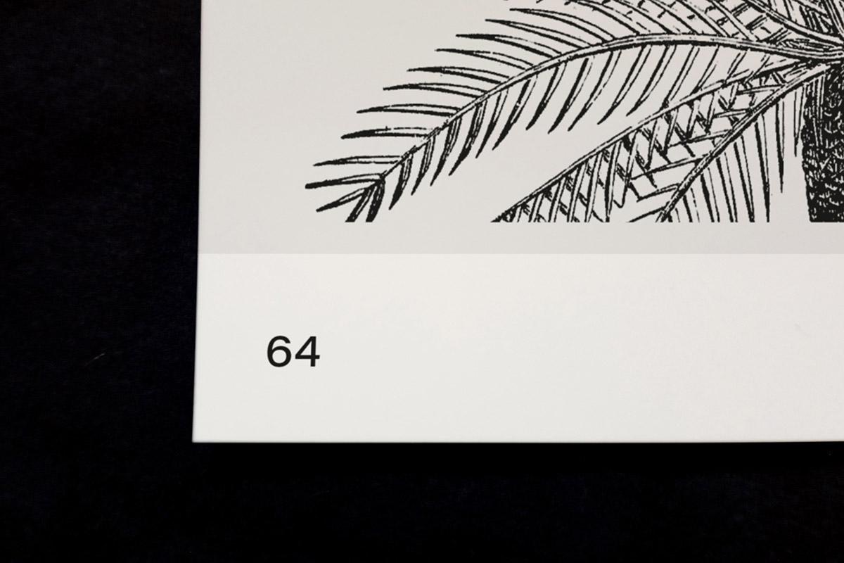 slanted-leafyhouseplants_image_10_1200px