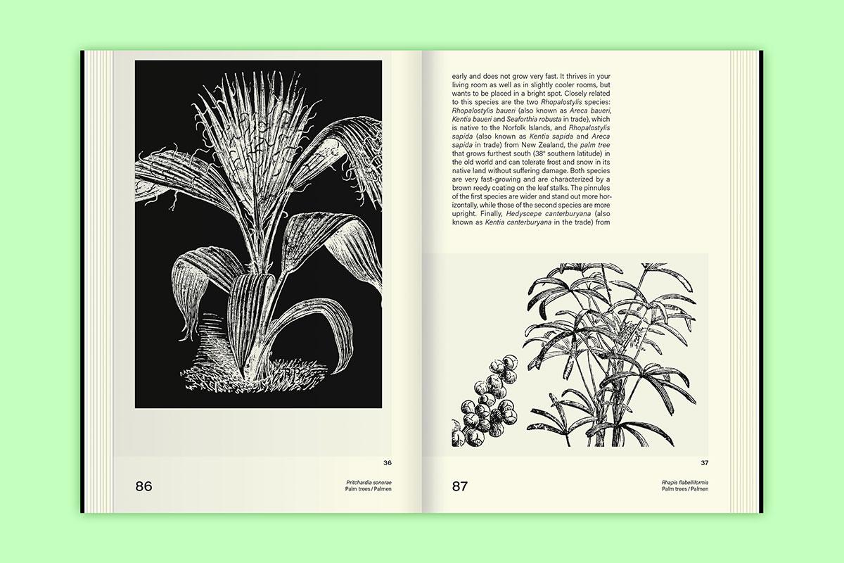 Slanted-Publishers-Leavy-House-Plants_11