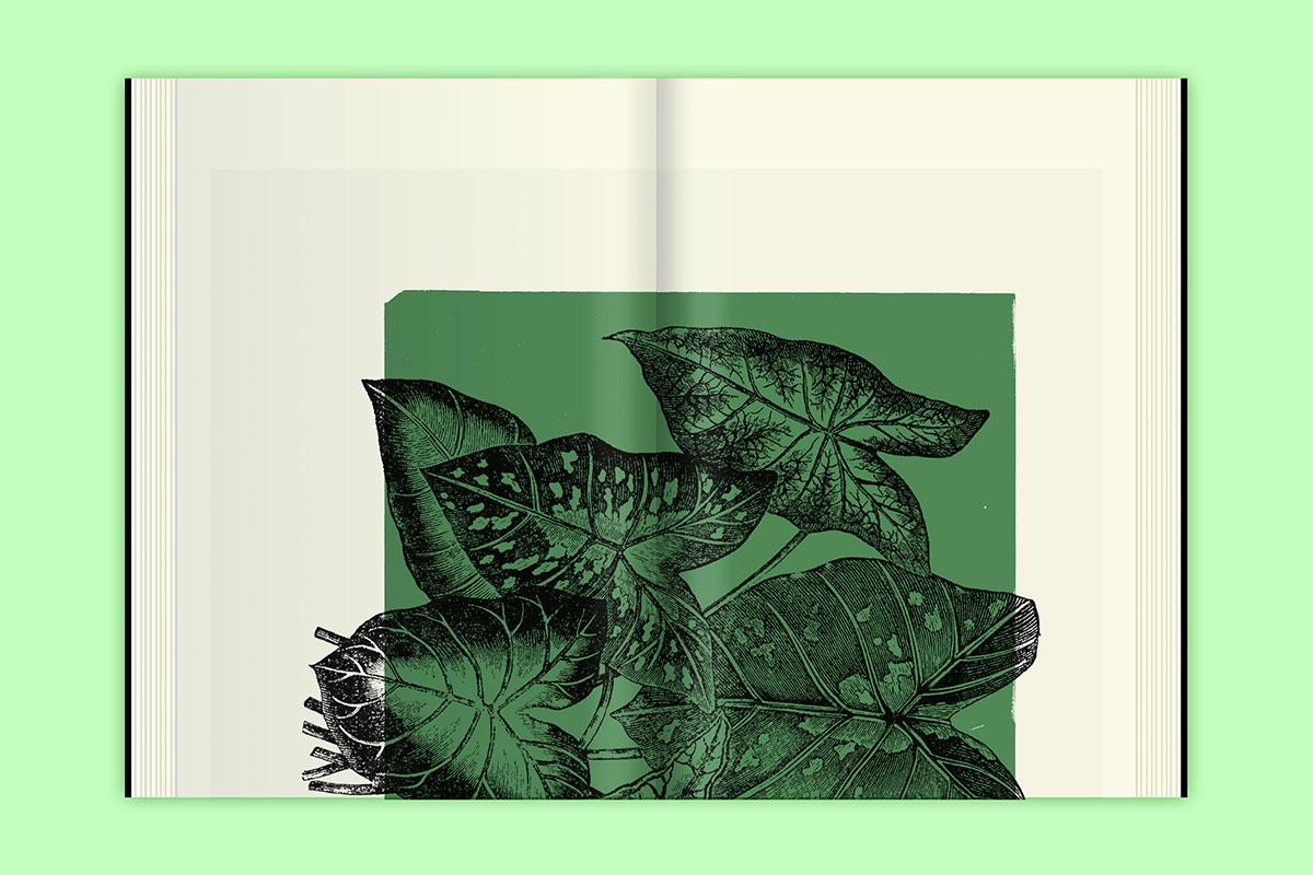 Slanted-Publishers-Leavy-House-Plants_13