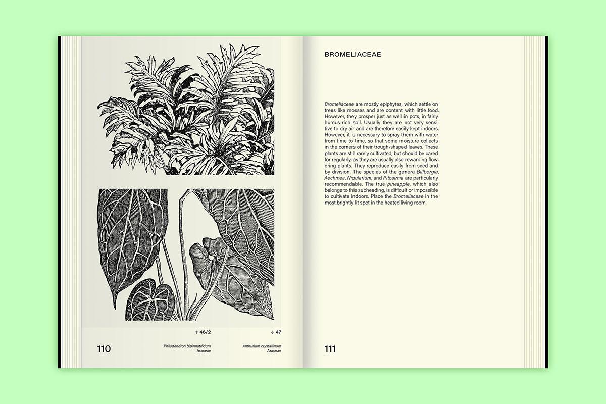 Slanted-Publishers-Leavy-House-Plants_15
