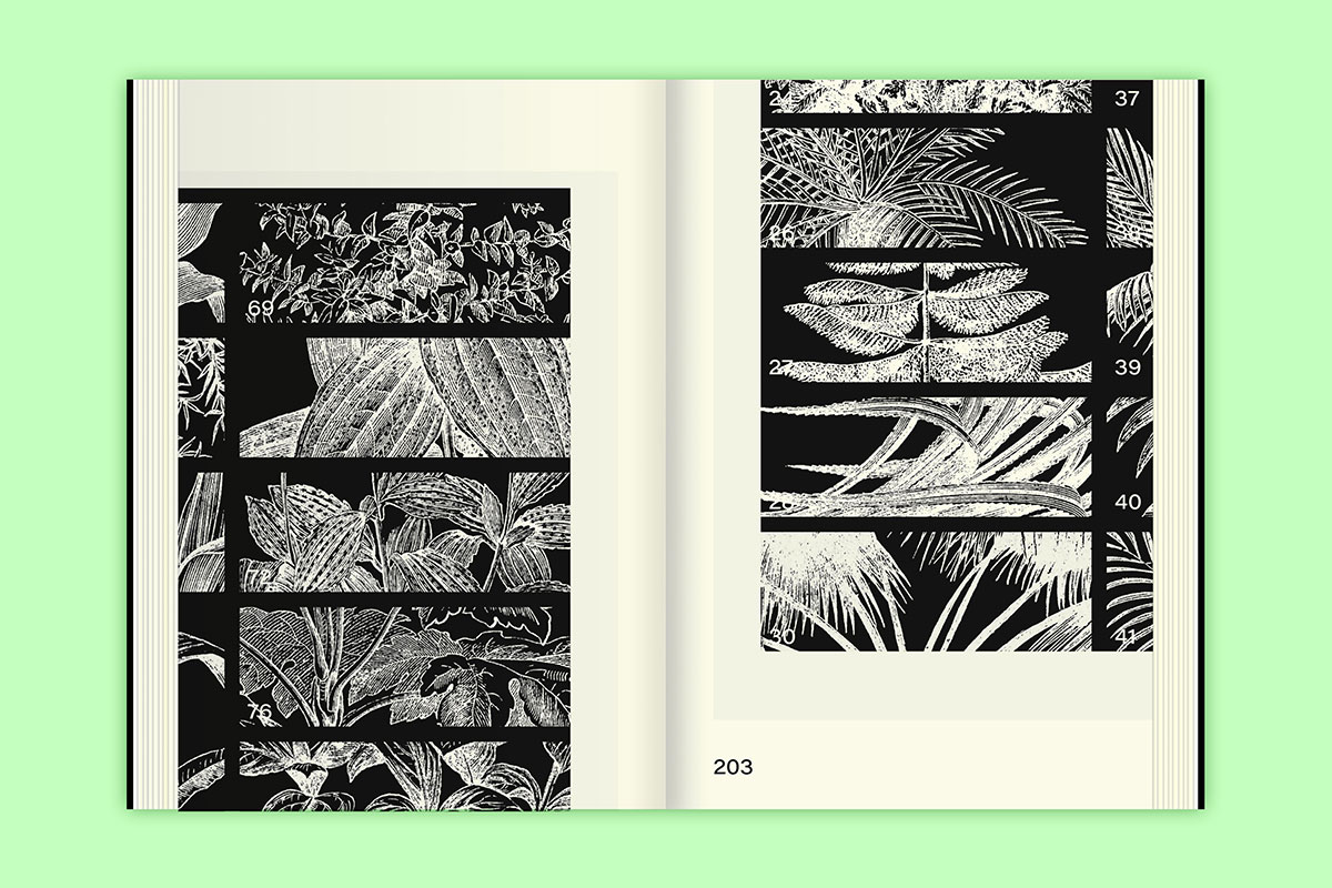 Slanted-Publishers-Leavy-House-Plants_17