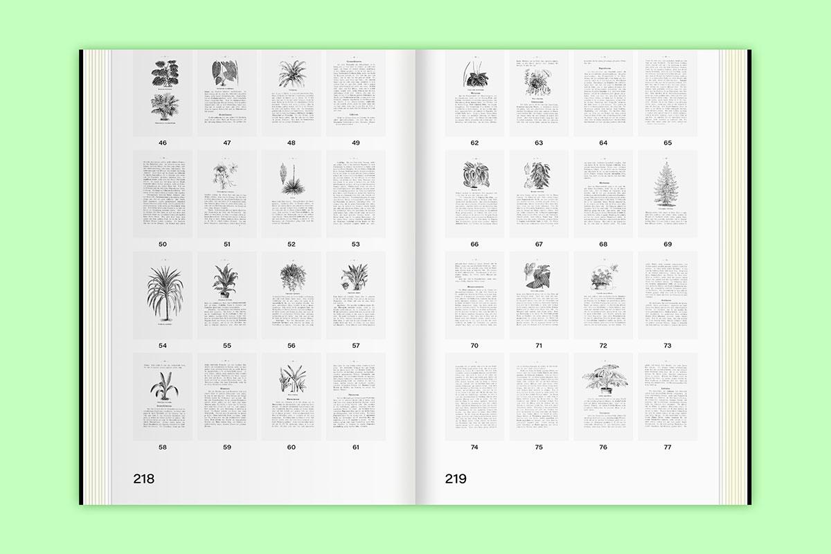 Slanted-Publishers-Leavy-House-Plants_19