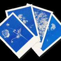 Blaublütiges Quartett | 4 Floral Risograph Postcards