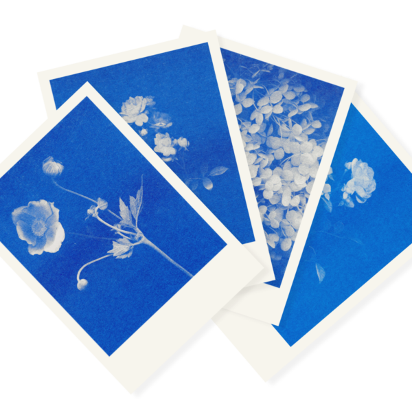 Blaublütiges Quartett   4 Floral Risograph Postcards