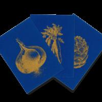 Goldenes Gemüse | Golden Veggie Trio | Riso Postcards