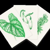 Immergrün | Evergreen | 3 Risograph Postcards